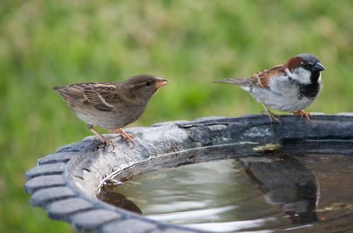 Give birds a bird bath to help attract them into your garden