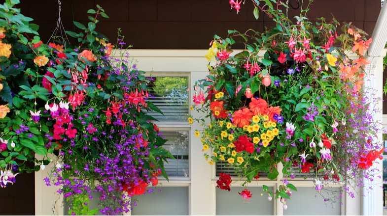 Best trailing plants for hanging baskets