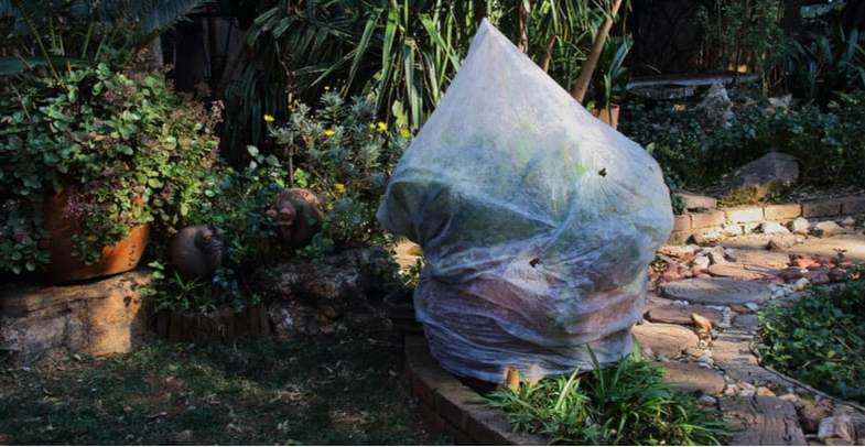 How to protect plants from frost and the winter weather