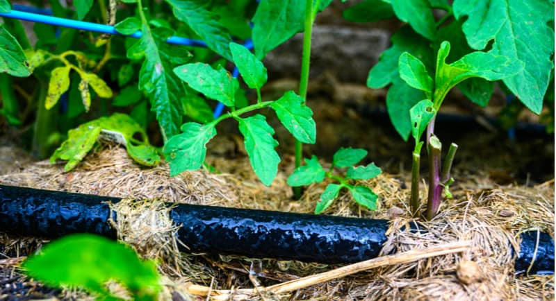Best soaker hoses for watering beds, borders and under hedges