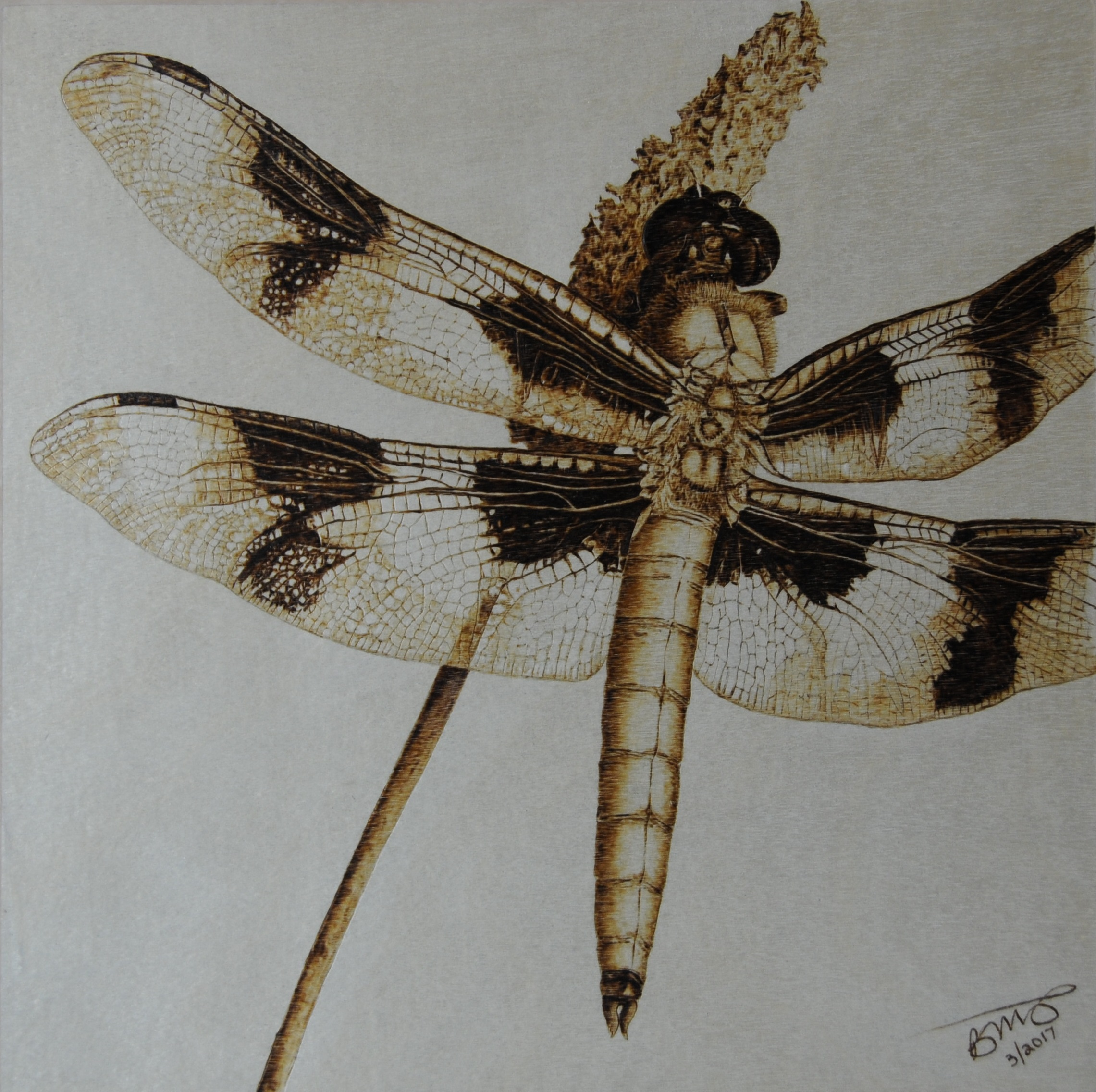 dragonfly on wood panel canvas pyrography art wood burning