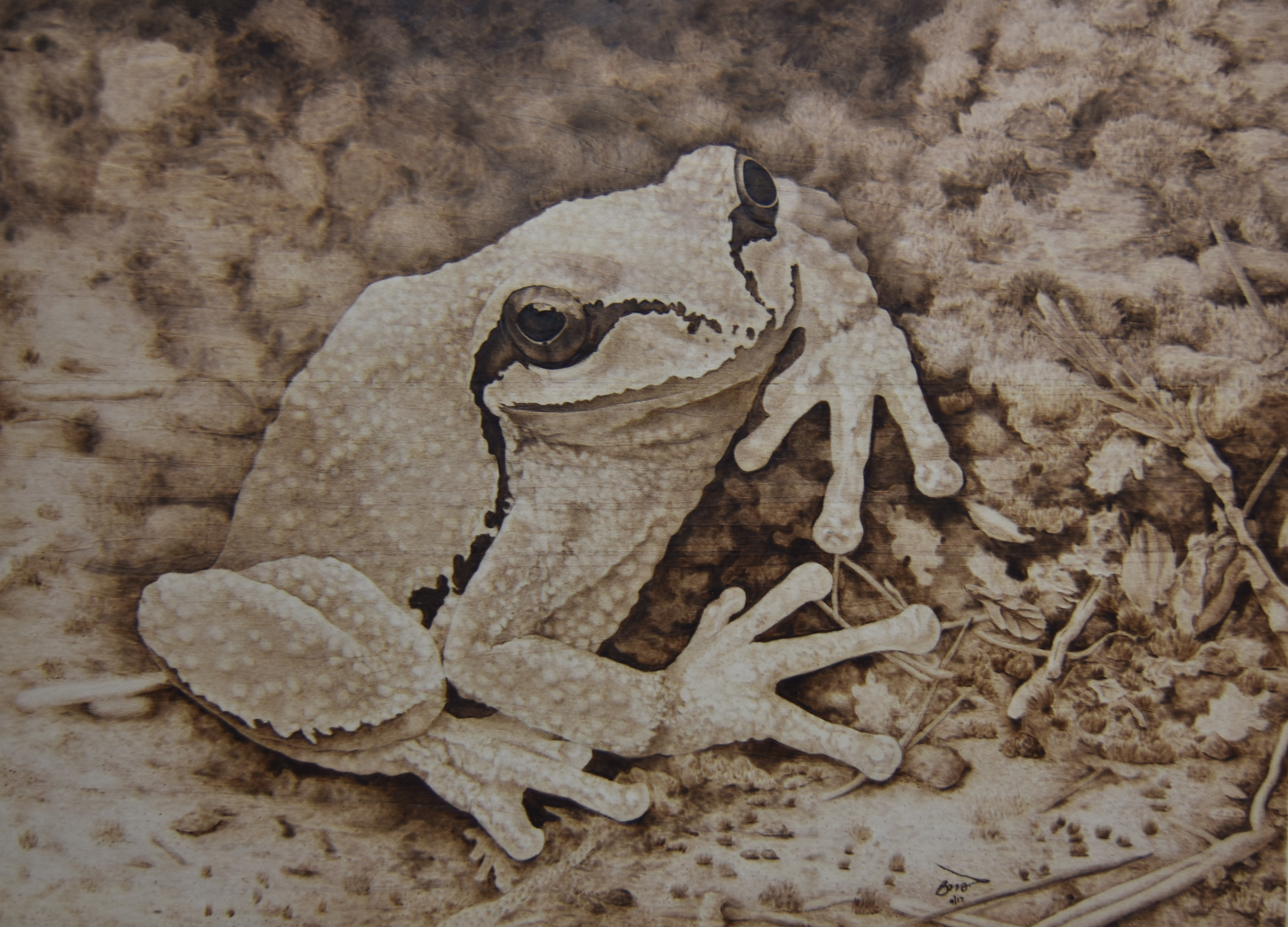 ART Wood Burning I Have A Small Pond In My Backyard And The Spring It Becomes Tree Frog Wooing Grounds From Dusk Till Dawn There Is Chorus Of