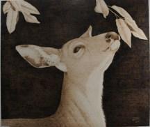 Venison - black tail deer