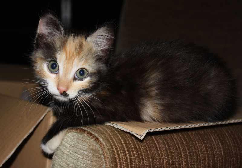 Hanni als ganz kleines Kätzchen.