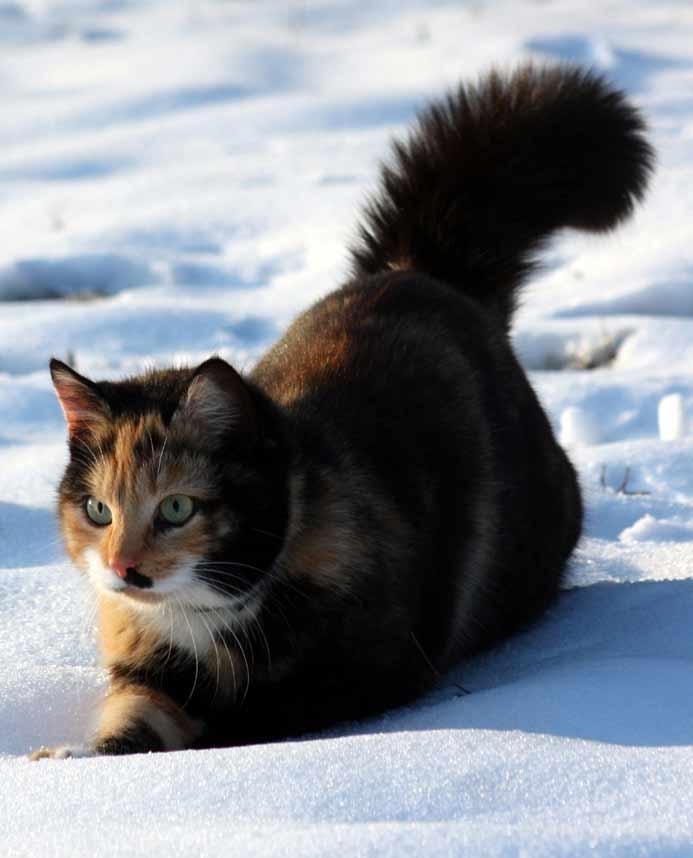 """Im Schnee kommt das """"Bärtchen"""" besonders gut zur Geltung."""