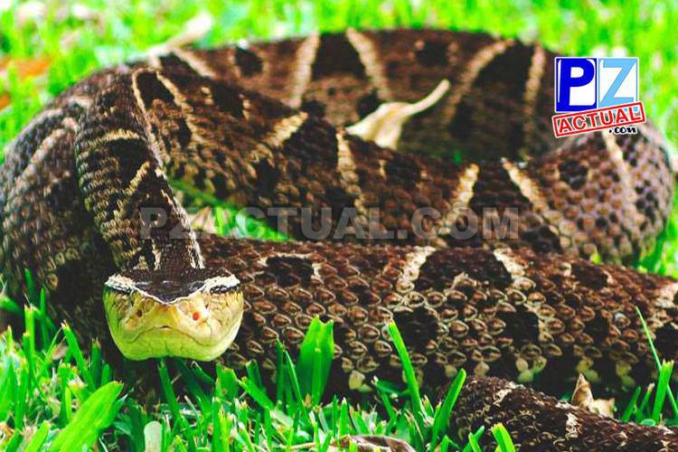 ¿Sabe usted que hacer y que NO hacer en caso de mordedura de serpiente?
