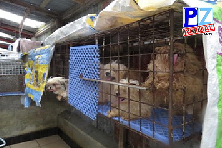 Sentenciaen favor del bienestar animal en Costa Rica