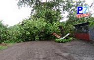 Adulto mayor murió en Golfito  al caerle rama de árbol que podaba.