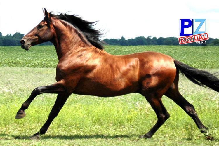 ¿Sabe usted cuál es la importancia de desparasitar su caballo?