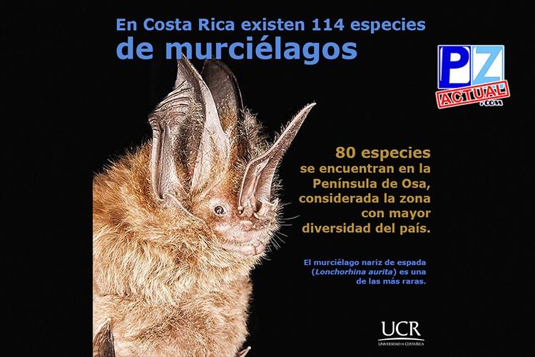 Científicos investigan murciélagos en cavernas de la Región Brunca.