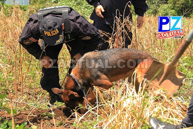 Seguridad Pública condecora a 16 perros que dieron todo a la seguridad ciudadana.