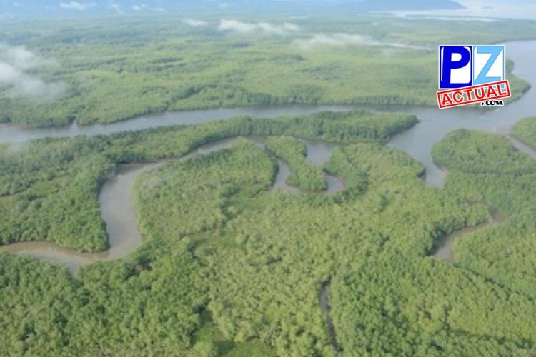 Fiscalía logra condena de presidente de Junta Directiva por drenaje de humedal en Golfito.