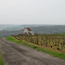 Montgueux Vineyards in Champagne