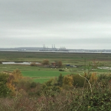 Northward Hill - RSPB sanctuary with cows, sheep, and ships