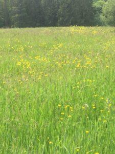 Meadow on Gribble Bridge Lane