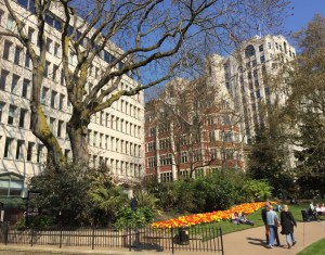 A river of tulips in Embankment Gardens