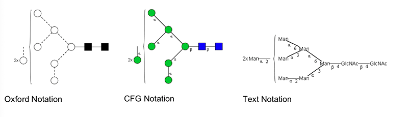 Man8 Glycan Structure