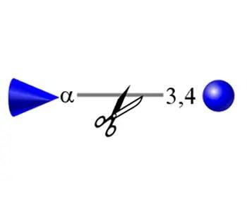 alpha-(1-3,4) fucosidase image