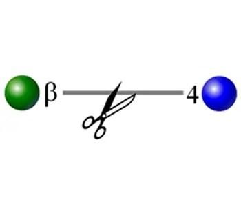 beta galactosidase image