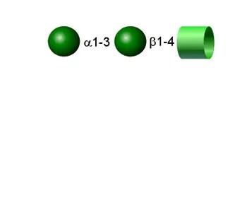 Alpha Gal 2-AB glycan