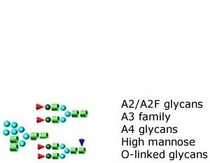 Glycan Standards