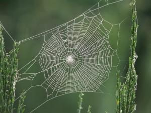 spider_web