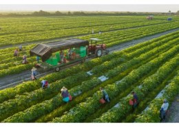 Is government providing benefits to organic farmers?