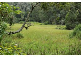 The national forest policy aims at maintaining how much of the total geographical area under forests?