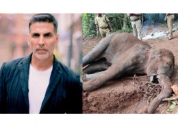 What is Actor Akshay Kumar reaction on the cruel act of Elephant Killing?