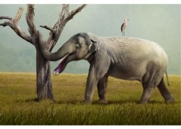 In your opinion, can an elephant's tusk be considered as an extension of tooth?