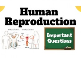 Why is human reproduction important?