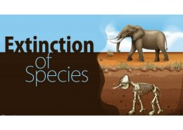 Does animal extinction affect humans?