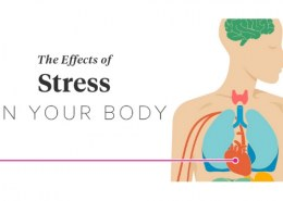 What organs are affected by stress?