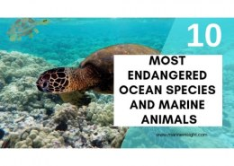 How many sea animals are endangered?