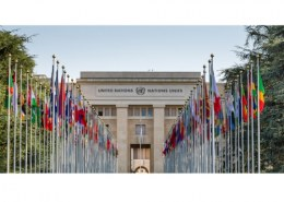 What degree do you need to work in the UN?