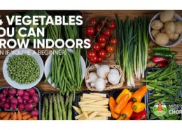 Which are the vegetables that you can grow indoors?