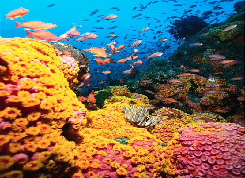 Aquatic Plants Under Water