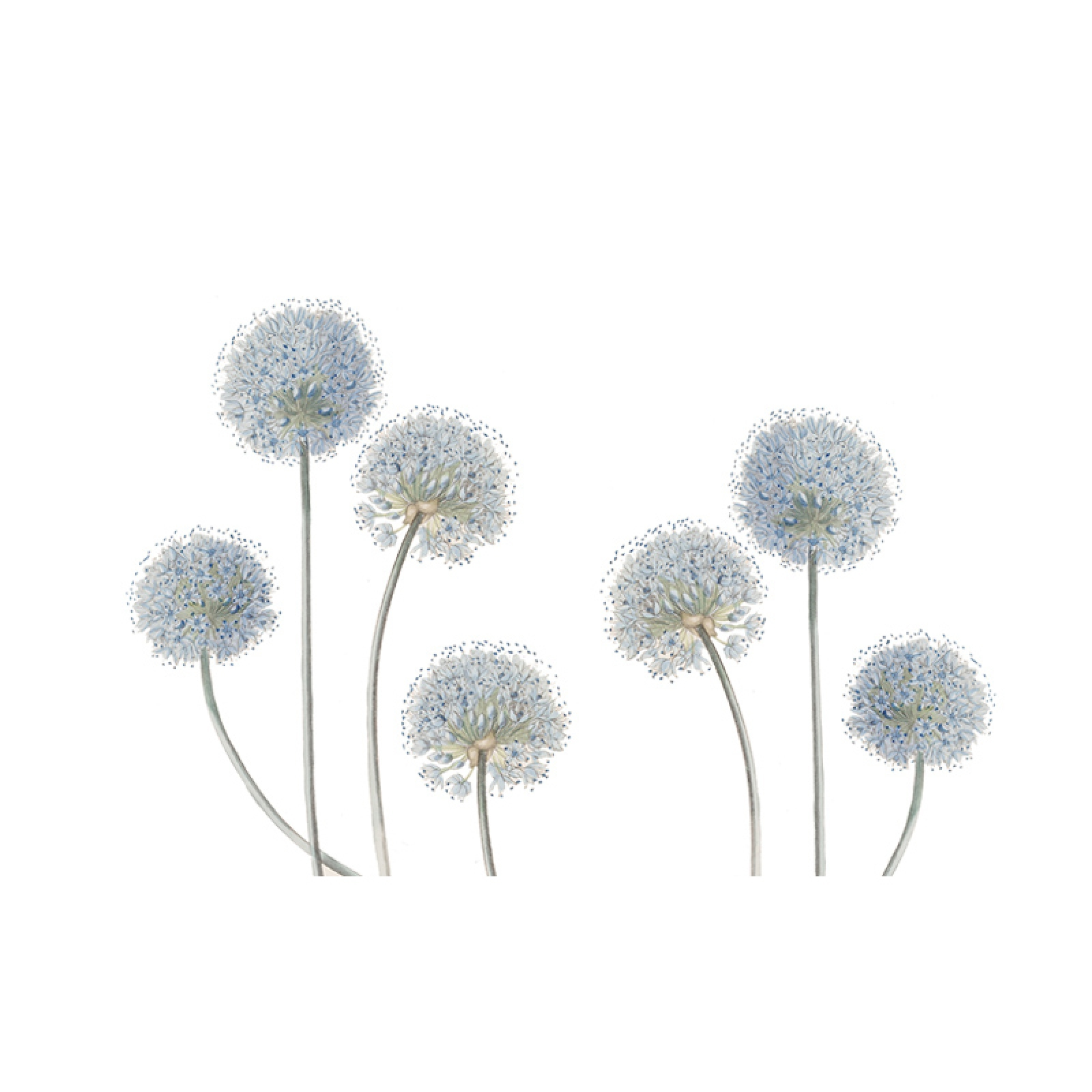 Pvc Self Adhesive Dandelion Wall Stickers For Living Room