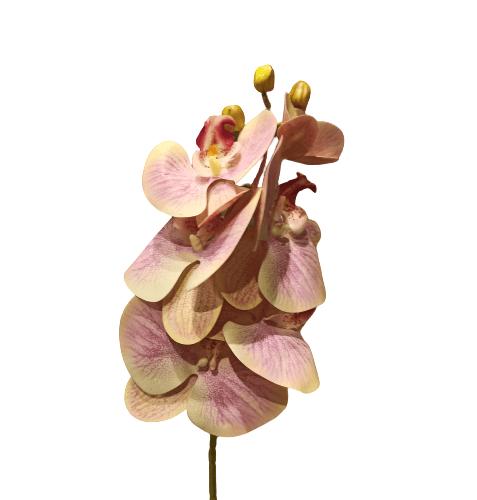 Haste de Orquídea – EM0006