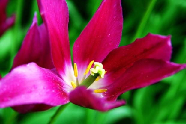 Zhongshan Park Qingdao Flowers