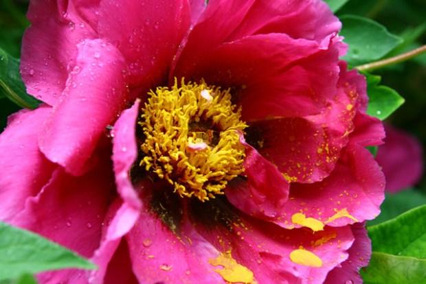 Zhongshan Park Qingdao Pollen Petal