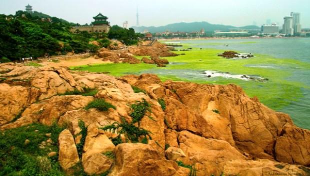 Qingdao Photos Alexandra Nosach Lu Xun Park Algae Huiquan Bay