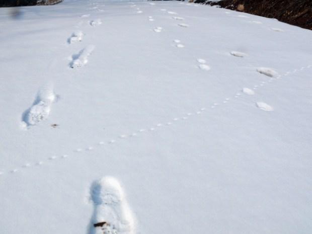 Snowprints Huangdao Qingdao Manimal