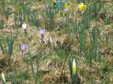 2015-04-29-Les_Moussieres-Bellecombe-Photos_Steph-IMG_3729