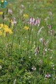 2015-05-26-Qispi-Jura_Leman-Dent_Vaulion-Vallorbe-IMG_9035