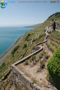 2015-05-27-Qispi-Jura_Leman-Lavaux-IMG_9240