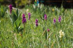 2015-05-28-Qispi-Jura_Leman-Hautes_Combes-IMG_9299