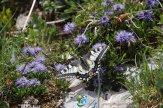 2015-05-30-Qispi-Jura_Leman-Colomby-IMG_9540