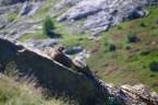 Marmotte – Jour 5 – Tour du Marguareis – Juin 2016 – Trek, Rando, Italie