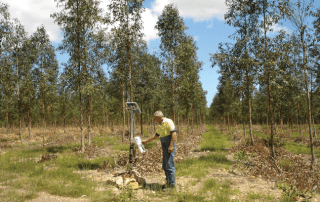 Eucalyptus tree plantation with irrigation